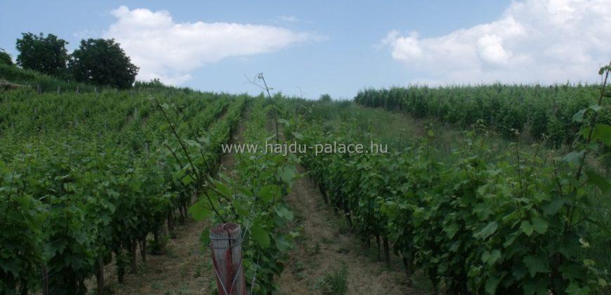 Tokajban 3267 m2 szőlő terület eladó