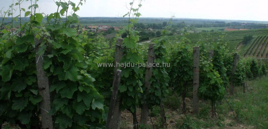 Tokaj-Hegyalján szőlő művelési ágú 1,18 ha terület eladó