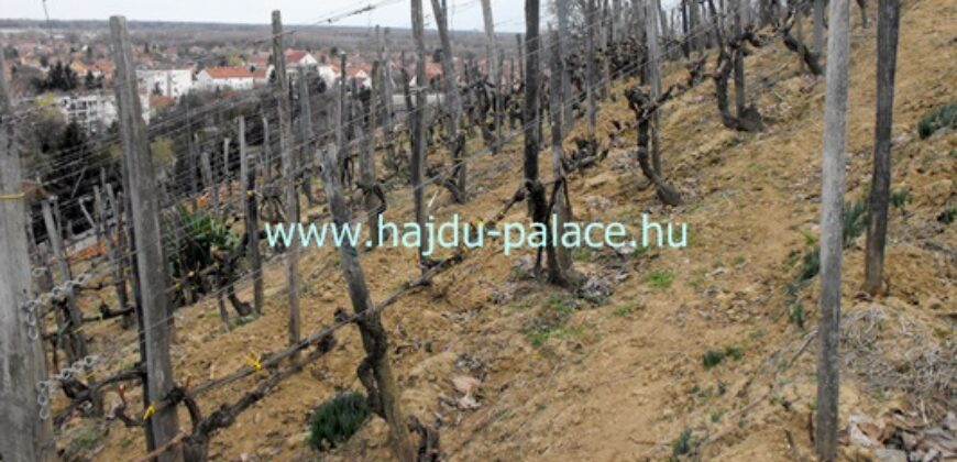 Tokajban szőlő művelésű zártkert eladó, kis feldolgozóval pincével